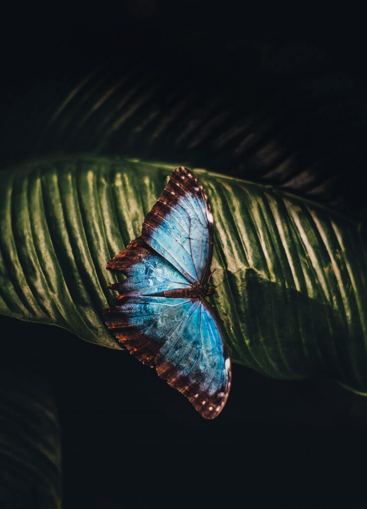 A butterfly of hope and transformation