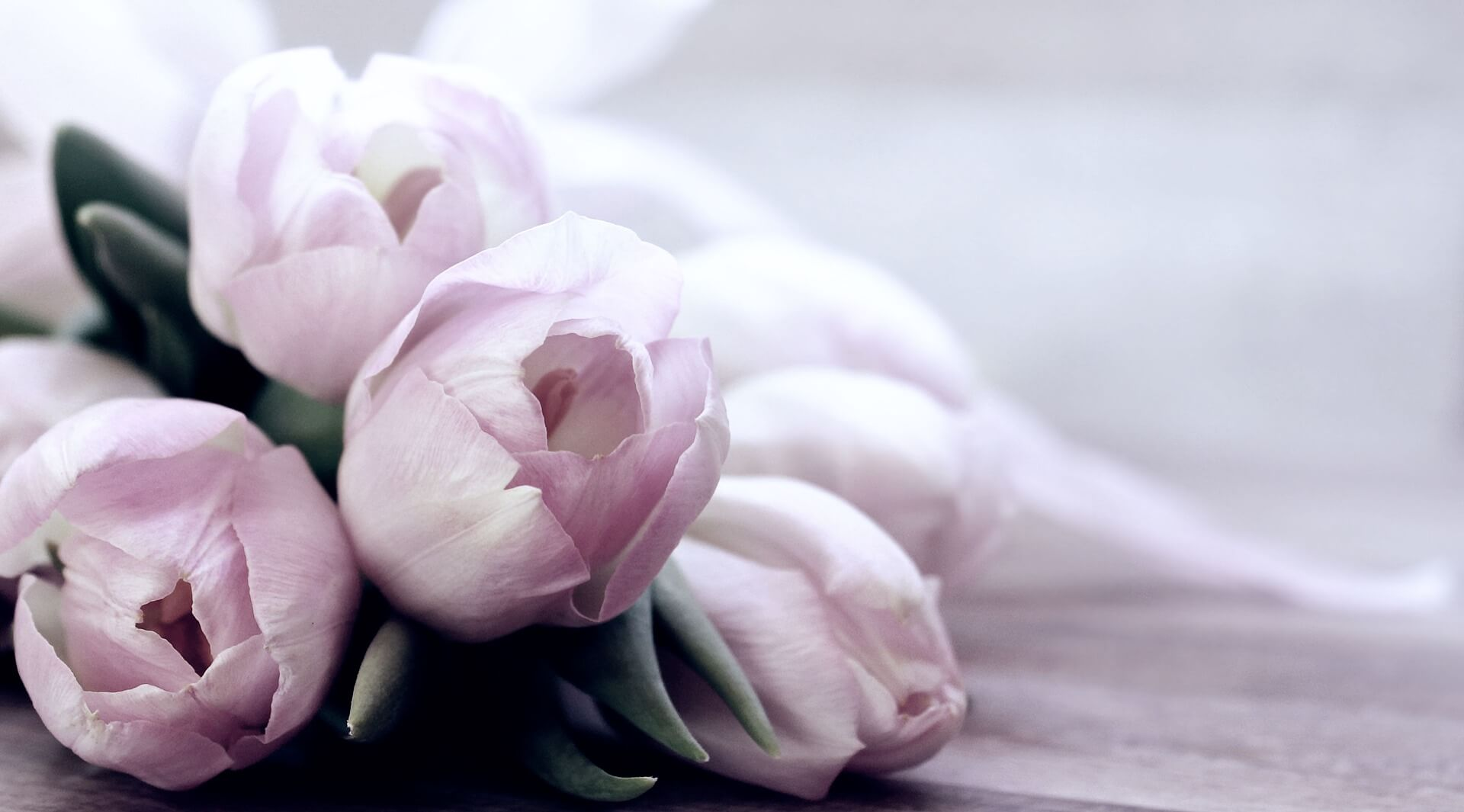Calming, stress reducing tulips recommended by nutrition and lifestyle coach