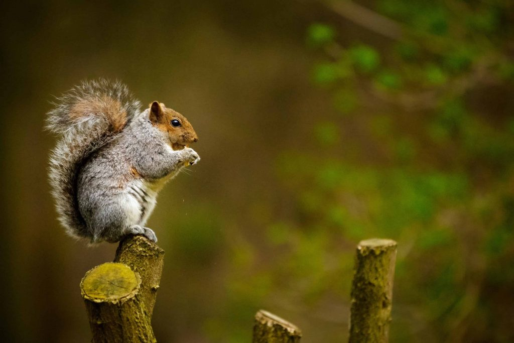 Conversations with squirrels can teach you about mind-body connection